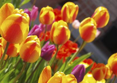 Flores en el Jardín de Dios